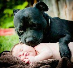 Soo adorable!! Pit bull