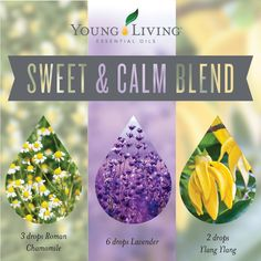 Sweet & Calm Blend: To your diffuser, add 3 drops Roman chamomile essential oil, 6 drops lavender essential oil, 2 drops ylang ylang essential oil. Breathe it in. Chamomile Essential Oil, Yl Essential Oils, Essential Oil Perfume, Essential Oil Diffuser Blends, Young Living Essential Oils, Yl Oils, Lavender Oil Benefits, Peppermint Plants, Peppermint Oil