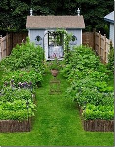 vegetable garden and shed