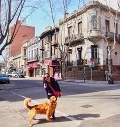"""""""Migo"""" espera eu fazer uma pode também... pá ... saí toda torta. City Tour Dog em Montevideo. Viagens para recordar. Um lugar pra voltar.  #montevideo #uruguay  #mercosul #americadosul #sudamerica #viagem #férias #trip #travel #ootd #photooftheday #memories #perro #dog #cachorro"""