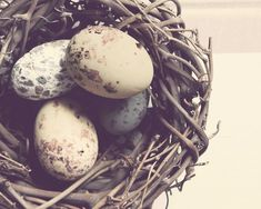 Feather Your Nest - Pastel Rustic Nest Photography Print - Shabby Chic Brown Blue Cream Bird Nest Photo on Etsy, $12.00
