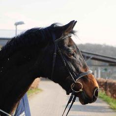 Lauf, Fee, lauf. So heißt mein Abschiedstext an mein Pferd Fee - nach 22 gemeinsamen Jahren.