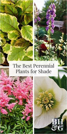 You'll love these easy-growing, shade-loving perennials. Try some of our favorites, such as the toad lily, hosta, or wild ginger. Bring some color and beauty to your yard or garden, and enjoy pretty flowers and foliage year after year. #perennials #gardening #flowers #shadeflowers