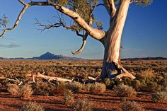 Flinders Ranges - The Sentimental Bloke