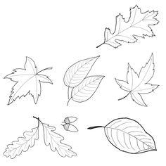Vorlage zum Ausdrucken und Ausmalen - unterschiedliche Herbstblätter