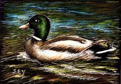 ACEO Original Art Mallard Duck Scratch Board by syoderart