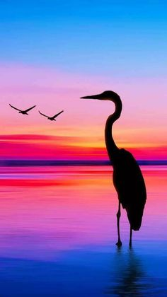 Ideas Sunset Silhouette Art Painting Beautiful A few varied photos that I like Sunset Silhouette, Silhouette Painting, Bird Silhouette Art, Simple Acrylic Paintings, Acrylic Art, Pastel Paintings, Art Paintings, Sunrise Painting, Beach Sunset Painting