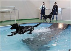 dog pool | charlie the dog jumps into a pool at a new cat and dog hotel in san ...
