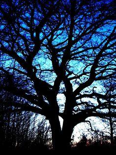 Grande Quercia vicino CasaEdera #nature #photo #art #tree