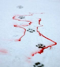 """вяσкєη ηιgнтѕ ::PART 6:: Scarlet blood splattered across the snow, tainting its flawless white color. Flint yowled in pain as Slash drew long wounds across his ear with outstretched claws. Slash let out a rumbling chuckle """"What's the matter, never seen blood before, kitty?"""" Star hissed in rage, her furry cream pelt bristling as she leapt on Slash, dragging her battle-trained claws across the tabby tom's right eye. Flint leapt over to help, clawing Slash's stomach with unleashed rage. The…"""