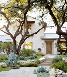 Creating a Waterless Garden. A beautiful stone path planted with colorful succulents and other drought-resistant plants at the sides is a gorgeous look for a front and back yard alike. Aside from succulents you can plant showy Yucca trees and shrubs along with a great number of cacti of various shapes and sizes.