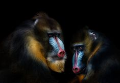 15 Finalists from Smithsonians 13th Annual Photo Contest