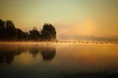 Les oies s'envolent by Andre Villeneuve