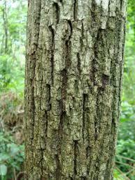 Resultado de imagem para troncos para decoração