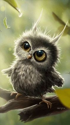 Sweet Adorable Baby Owls - World's largest collection of cat memes and other animals Baby Owls, Cute Baby Animals, Animals And Pets, Funny Animals, Cute Baby Owl, Baby Baby, Felt Baby, Baby Crib, Beautiful Owl