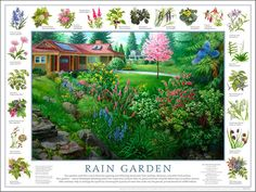 A rain garden is nothing more than a depression in your yard planted with native plants that collects water run-off from your roof, driveway or other hard surfaces.