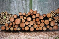 """Buy the royalty-free Stock image """"Wood stack in a danish forest"""" online ✓ All image rights included ✓ High resolution picture for print, web & Social Me. What Is Great, Lucky Penny, Got Wood, Danish Furniture, High Resolution Picture, Diy Projects, Stock Photos, Hans Wegner, Logs"""