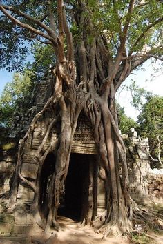 Ta Prom Temple, Cambodia