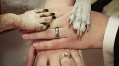 Il sindaco di Pontirolo Nuovo, centro di 5 mila abitanti della Bassa bergamasca, ha vietato a una coppia di sposi che fossero i cani a portare loro le fedi per il rituale scambio durante la cerimonia
