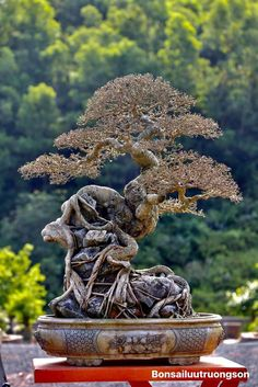 Bonsai Styles, Bonsai Plants, Plant Art, Art Of Living, Lion Sculpture, Statue, Indoor, Ideas, Bonsai Trees