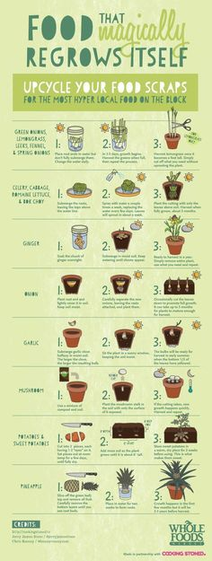 That Magically Regrows Itself from Kitchen Scraps Be sure to upcycle your food scraps. All of this food will magically regrow itself!Be sure to upcycle your food scraps. All of this food will magically regrow itself! Organic Gardening, Gardening Tips, Container Gardening, Urban Gardening, Organic Farming, Indoor Gardening, Kitchen Gardening, Indoor Plants, Gardening Zones