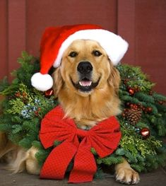 .Next Theme: A Christmas Tail♥   woof-woof!