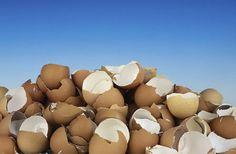 <p>Fica aqui algumas dicas, de como pode utilizar as cascas de ovos. A partir de hoje, não deite as cascas de ovos para o lixo. 1. Adubo para solo naturalmente fertilizado Cascas de ovos decompõem se rapidamente na pilha de compostagem e adicionam cálcio e outros minerais valiosos para o …</p>