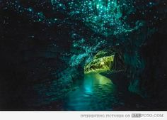 Waitomo Glowworm Caves, New Zealand - Waitomo Glowworm Caves, New Zealand - Waitomo Glowworm Caves is a popular and the most amazing cave in...