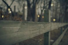 13/52 Bokeh, Fence, Boquet