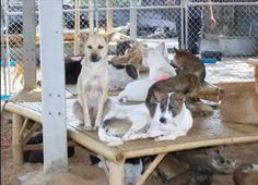 What happens to dogs that get saved from the dog meat trade? If we demand that that practice be stopped are we not also responsible for the well being of those dogs that have been Saved?   http://twolittlecavaliers.com/2013/01/what-happens-to-dogs-saved-from-the-dog-meat-trade.html