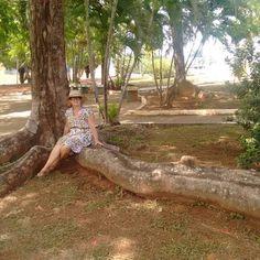 Flamboyant: minha árvore preferida. Olha só essa raiz!