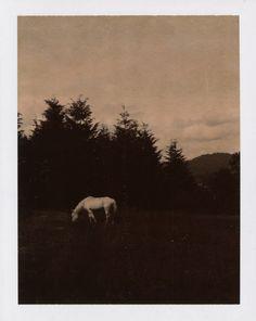 Photo by Autumn De Wilde