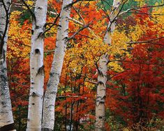images of apple picking in the adirondacks - Google Search