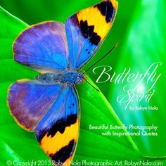Large Rainbow Butterfly Garland: Inspirational Butterfly Gifts | Robyn Nola Gifts
