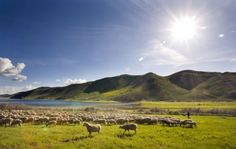 Lava Lake Lamb Giveaway on Nom Nom Paleo