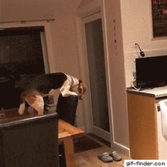 Clever Dog Uses Chair to Reach French Fries. I had No Idea dogs could learn to use tools like this!!
