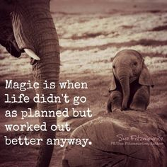 Magic is when life didn't go as planned but worked out better anyway. Can you relate? I sure can and I& just live on and on no matter what. Words Quotes, Wise Words, Me Quotes, Motivational Quotes, Inspirational Quotes, Sayings, Crush Quotes, Elephant Quotes, Elephant Love