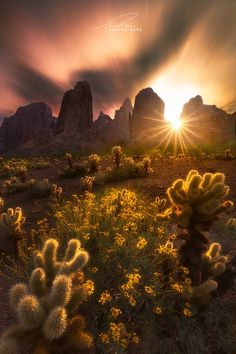 Kofa Mountains, Arizona, USA Mingle by Ted Gore