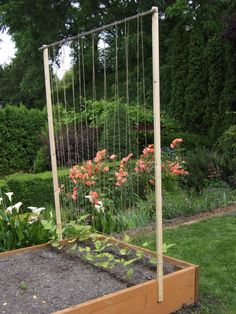 Simple space saving support for pole beans.  You could have permanent poles and just replace the string each season.
