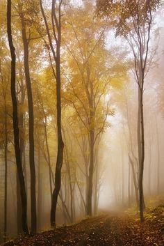 Autumn forest (Ore Mountains, Czech Republic) by Daniel Řeřicha / 500px