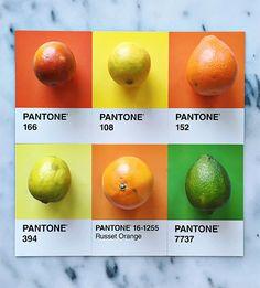 Designer combina criativamente cores de diferentes alimentos com as cartelas da…
