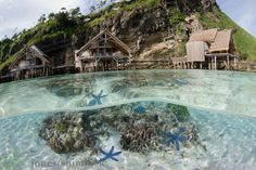 Misool Eco Dive Resort Indonesia
