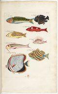 Poissons, écrevisses et crabes de diverses couleurs et figures ...