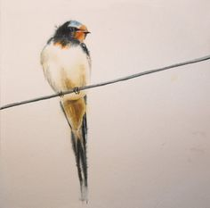 barn swallow by jennomat