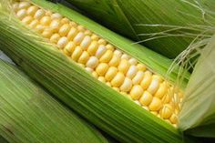 Curried Corn on the Cob with Goat Cheese - Farmers' Almanac