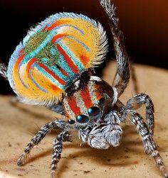 Örümcekleri Hiç Bu Kadar Renkli ve Sevimli Görmüş müydünüz? İşte 24 Kanıtı!