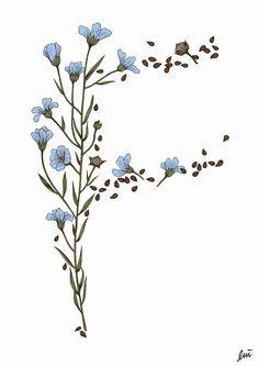Image result for borage sketch