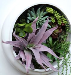 """XXL -"""" Living"""" Wall framed succulent planter - Looks so real you will have to touch it Succulent Frame, Vertical Succulent Gardens, Succulents Garden, Vintage Home Decor, Frames On Wall, Really Cool Stuff, How To Look Better, Planters, Urban Gardening"""