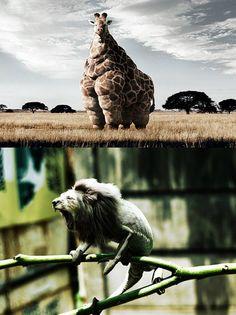 manipulación con animales