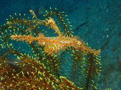 sand coral - Google 검색